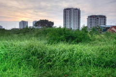 High grass and buildings HDR Stock Photos