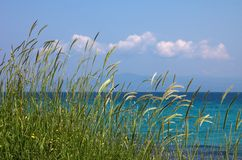 High grass and clouds. Near the sea Royalty Free Stock Images