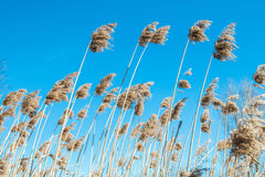 High grass field. Against the sky Royalty Free Stock Image