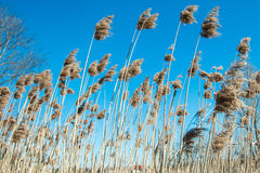 High grass field. Against the sky Stock Images