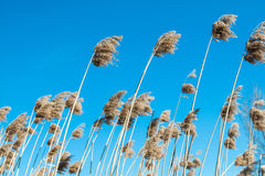 High grass field. Against the sky Stock Photography