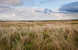 Field under blue sky in Ireland Royalty Free Stock Image
