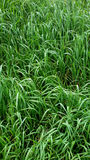 High grass Stock Photo