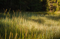 High Grass Royalty Free Stock Photography