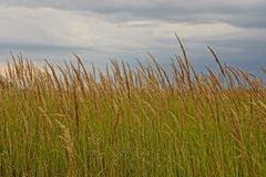 High grass on a meadow against the sky Royalty Free Stock Image