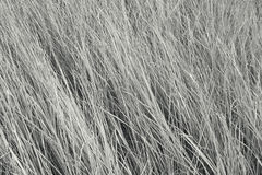 High grass Stock Image