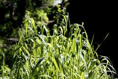High grass oasis. Oasis of a high green grass near a stream Stock Image