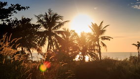 High Grass Palm Silhouettes on Beach at Backlight of Bright Sun. Panorama of high grass palms silhouettes on beach at bright sun backlight against azure sea blue stock footage