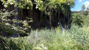 High grass in plitvice stock photos