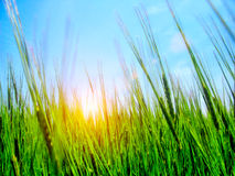 High grass and sky Stock Image
