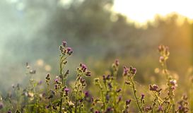 High grass on a summer green meadow filled with light Royalty Free Stock Images