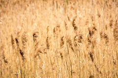 High grass. On sunny day (Poland, Europe Stock Photo