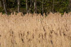 High grass. On sunny day (Poland, Europe Stock Images