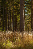 High grass with trees. In the sunlight - symmetric Stock Photography
