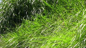 High grass stock video footage