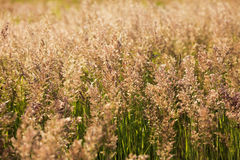 High green grass in the field on hot summer day Royalty Free Stock Images
