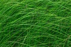 High green grass in a meadow. Close up of fresh grass on the field. Horizontal photo without people. Green grass background texture for design, catalog, menu stock images
