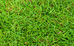 High green grass photo background. Green grass field background Royalty Free Stock Images