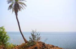 High green lonely palm tree on the mountain against the sea in the exotic Royalty Free Stock Images