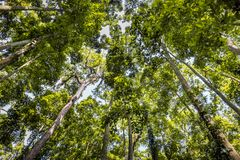 High trees of Monky Forest, Bali stock photography