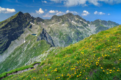 High hackly mountain ridges with yellow dandelion flowers,Fagaras,Romania Stock Photo