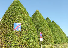 High hedge of an interesting shape Royalty Free Stock Photo