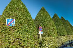 High hedge of an interesting shape Stock Image