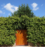 The high hedges and wooden gate Stock Image