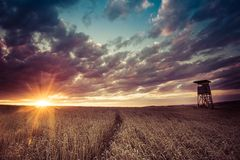 High hunting seat. Hunting forest lookout tower in a field at sunset Royalty Free Stock Photography