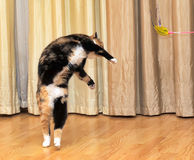 High jumping  cat Stock Images