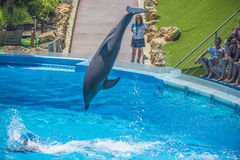 High jumps, dolphin show Royalty Free Stock Image