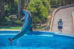 High jumps, dolphin show Royalty Free Stock Photos