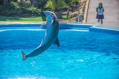 High jumps, dolphin show Stock Photography
