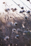 High key abstract thistle. With shallow depth of field royalty free stock photo