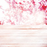 High key background of pink spring blossom Stock Images
