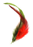 High Key feathers. High-key feathers against a white background Royalty Free Stock Images