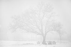 High key winter landscape Royalty Free Stock Images