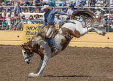 High Kicker. A cowboy tries his best to hang on for a good ride at the rodeo in Red Bluff, California. April 19th, 2015 Stock Photos