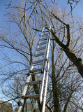 High ladder at a tree for tree trimming Stock Images