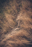 High laid dry grass background Stock Photos