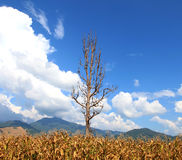 High latitude dead tree under blue sky Stock Images