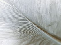 High magnification down feather Royalty Free Stock Photography