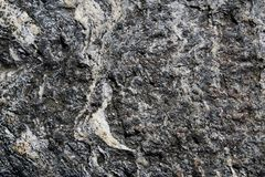 Metamorphic grade schist rock with white veins Royalty Free Stock Photography