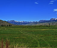 High mountain cattle pasture in front of Absaroka Mountain Range under summer cirrus and lenticular clouds near Dubois Wyoming Royalty Free Stock Images