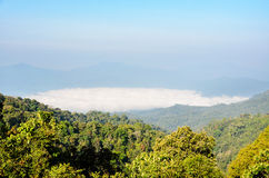 High mountain and fog in the morning Royalty Free Stock Image