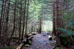 High mountain forest Stock Images