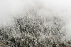 High mountain forest, covered by snowy hoar frost. Huanglong, Ch Stock Images