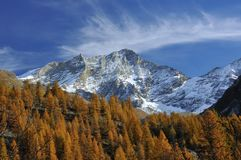 High Mountain, mare's tails and larch pines Royalty Free Stock Image