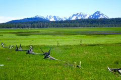 High Mountain Meadow - Idaho. Idaho's Sawtooth Mountains provide a beautiful background for a high elevation meadow Royalty Free Stock Image