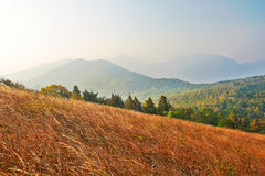The high mountain meadow Royalty Free Stock Image